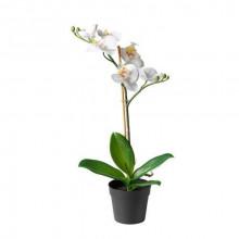 Орхидея белая, 1 ветка